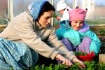 Gyerekek és felnőttek a Krisna-völgyi kertészetben