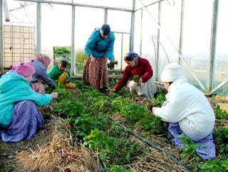 Kertészeti reggeleken is résztvesznek az iskolások Krisna-völgyben