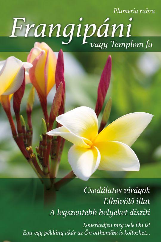 Frangipani_rollup-v2_540