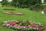 Krisna-völgyi tópart virágokkal