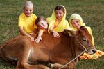 Krisna-völgy iskolásai Csandannal a kisbikával