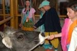 Anyáink-napja a Krisna-völgyi tehenészetben