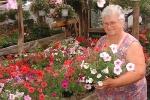 Krisna-völgyet díszítő virágok